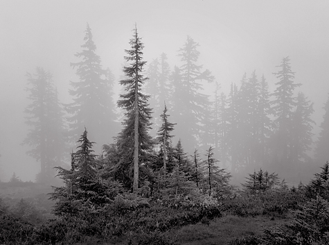 Trees-and-Fog-L